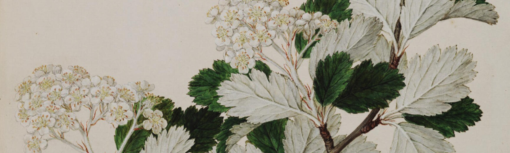 1780x520 plant