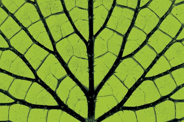 Close-up image of a leaf