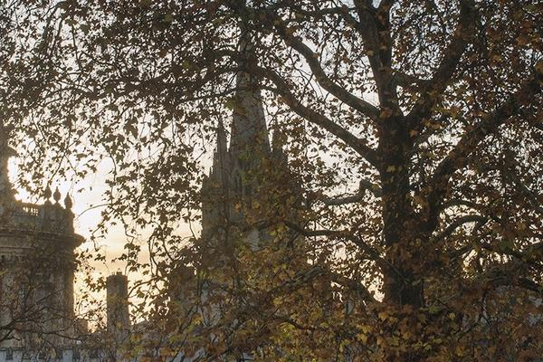 Trees in front of Oxford spires