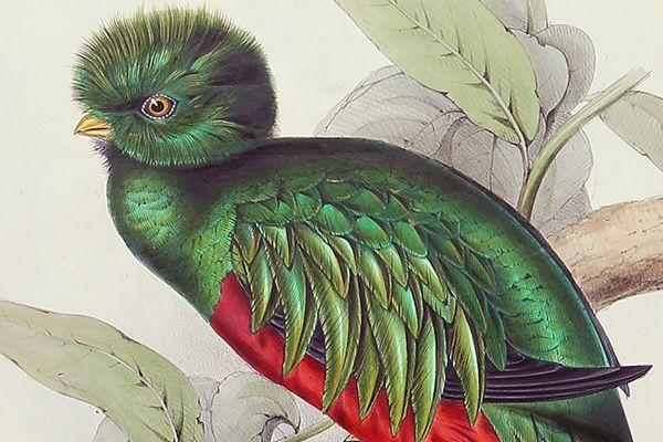 Art of a tropical green and red bird