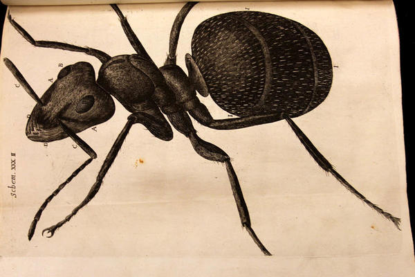 A detailed drawing of an ant