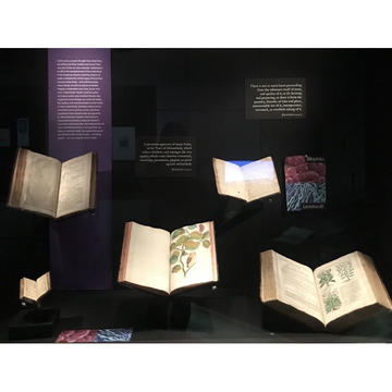 A photograph of an exhibition case showing open books and a photo of a bacteria